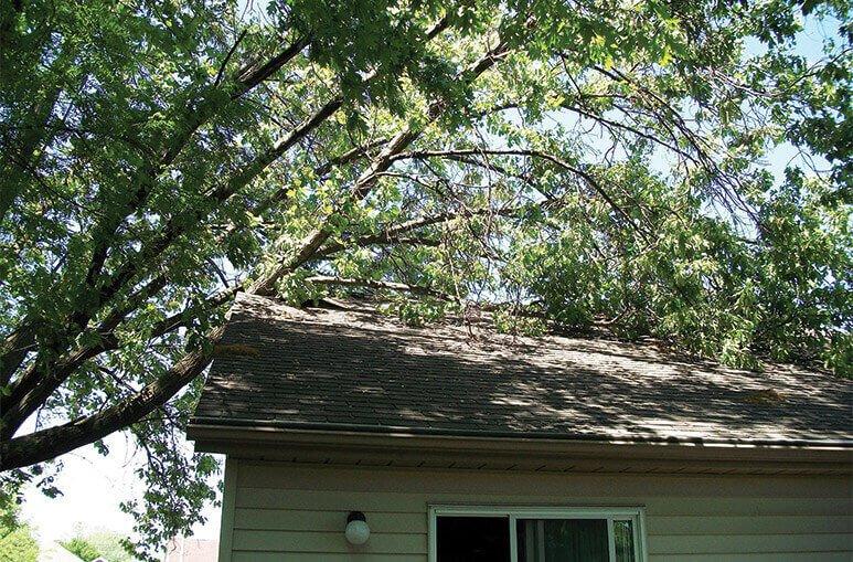 Tree Impacts